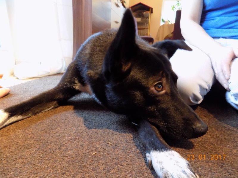 Akupunktur Behandlung Hund Pc6